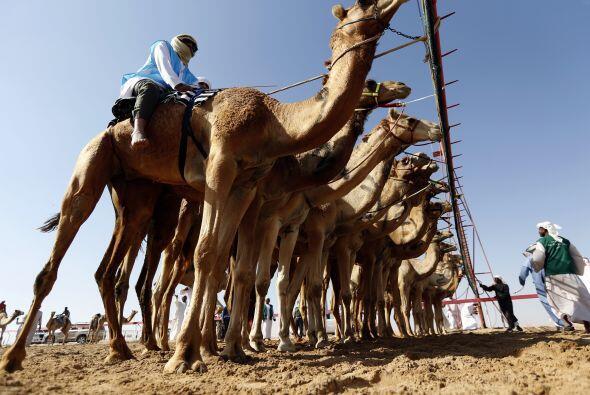 El Festival AMazain Dhafra Camel Festival, que atrae a participantes de...
