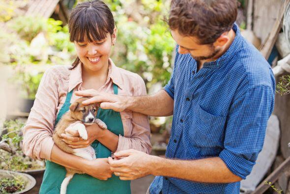 Es el mejor año para adoptar algún perrito o gatito que haya sido abando...