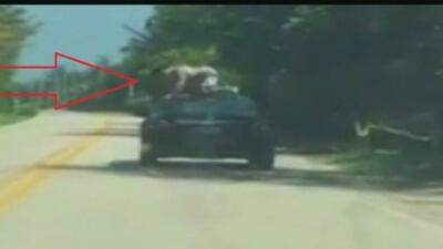 Jonathan Restrepo, de 25 años, saltó fuera del auto de su novia en medio...