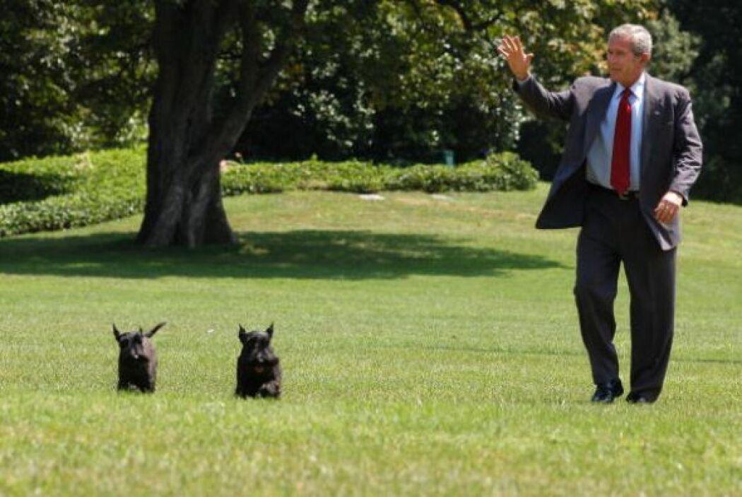 El presidente George W. Bush fue propietario de dos terriers escoceses n...
