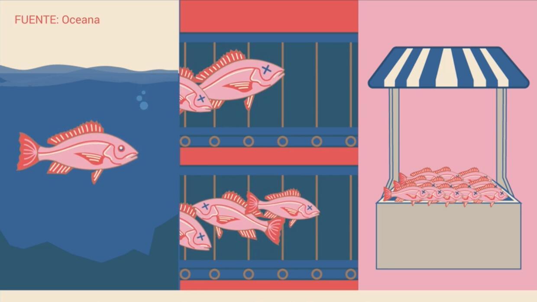 ¿Saben los consumidores de pescado lo que realmente están comprando?