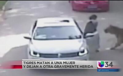 Mujer muere tras ser atacada por un tigre