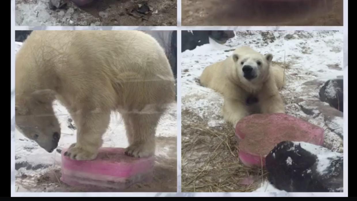 ¿Quién dijo que los osos no celebran San Valentín? oso.png