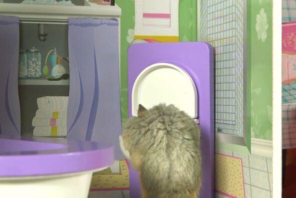 Toma agua de su baño y se refresca un poco.