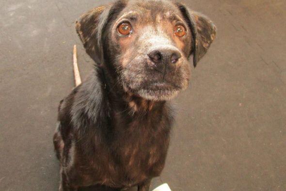 La encargada de Lucky Dog es Robin Herman, ella fue quien vio por primer...