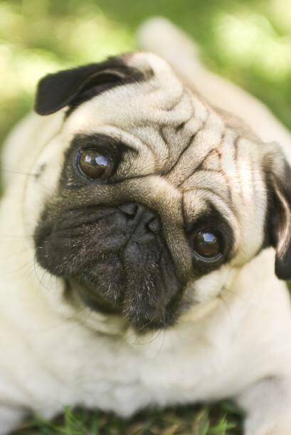 Además del libro y el perro de peluche, el estudio introdujo un tercer o...