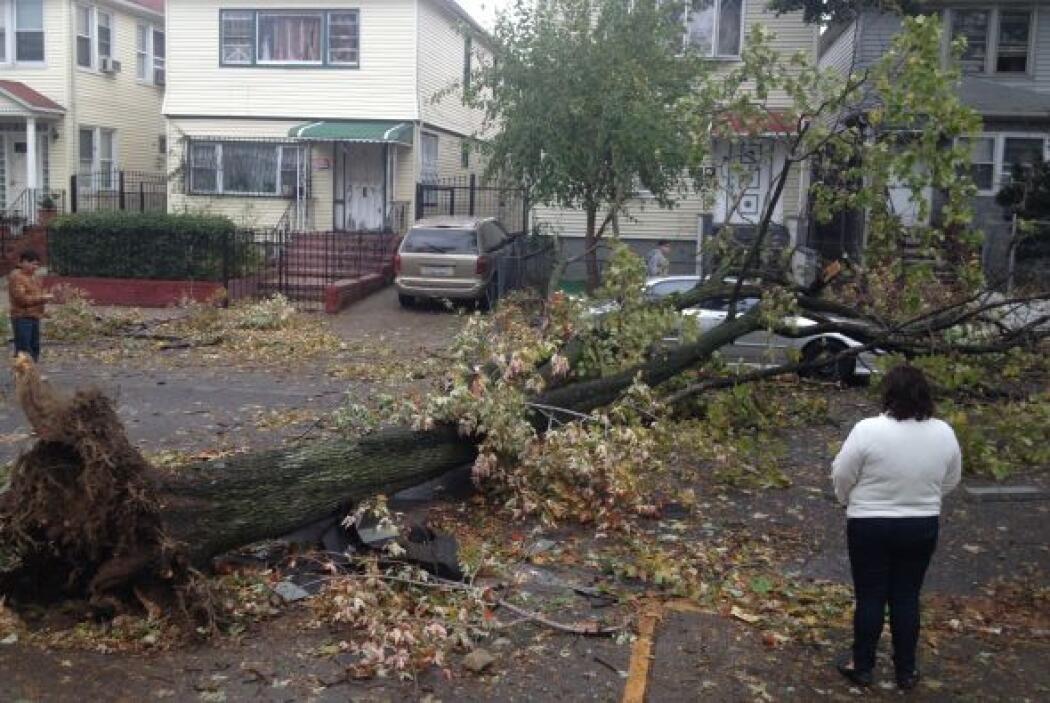 ' Tu Cámara' en Nueva York . Este árbol cayó sobre un auto en la calle 9...
