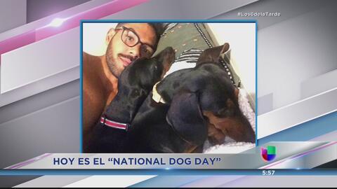 ¡Celebramos el Día Nacional del Perro en Los 6 de la Tarde!