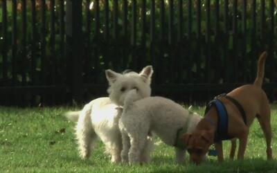 Alimentos que pueden ser 'veneno' para las mascotas