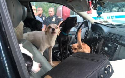 Oficiales del precinto 45 del NYPD rescataron a los animales y coordinar...