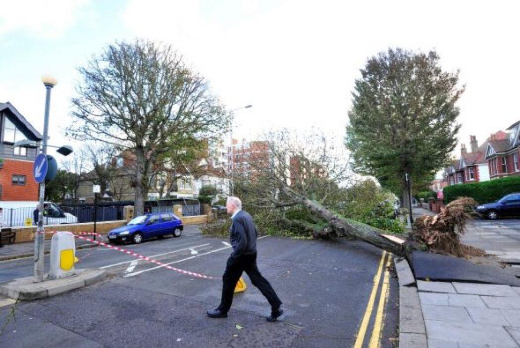 Un hombre falleció tras caerle encima un árbol mientras conducía su coch...