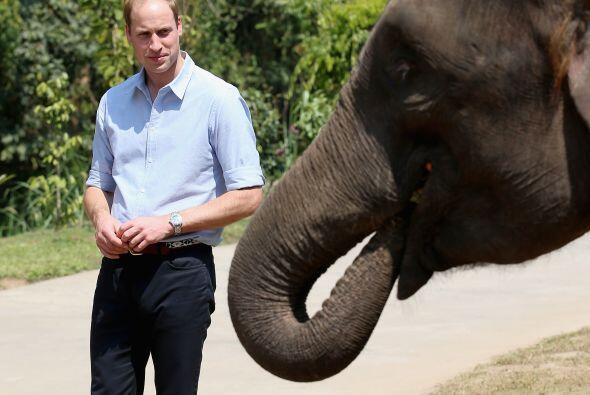 Este elefante tuvo una visita real.