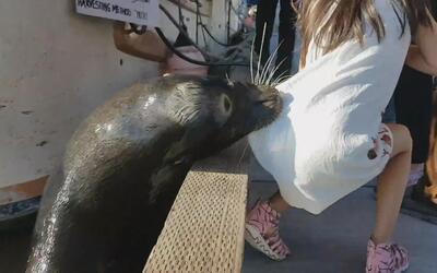 Qué hacer si te encuentras con un animal salvaje en su habitat como le p...