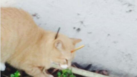 Buscan al sospechoso de maltratar cruelmente a un gato que murió en Miam...