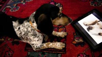 """Dog TV, que según su sitio web es """"el primer canal de televisión para pe..."""