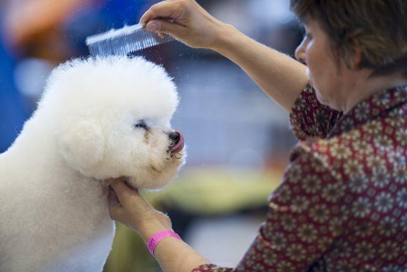 Por eso, como un perro debe permanecer semanas sin bañarse lo ideal es c...