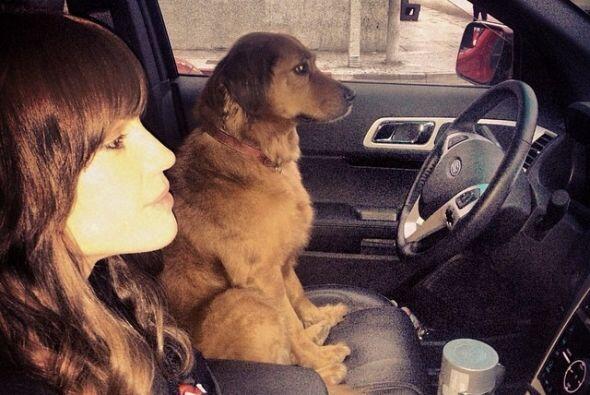 """Hilary declaró: """"mis perros me acompañan al set. La más pequeña, Karoo s..."""