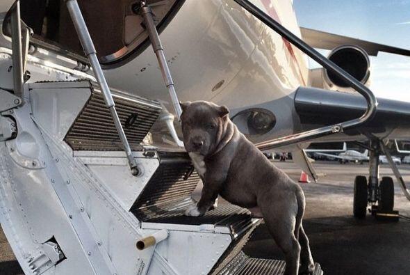 Parece ser que para estos perros los vuelos privados son la mejor opción.