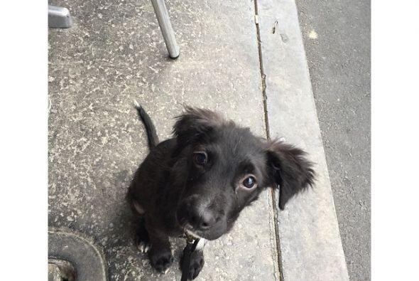 """""""Hay muchos perros allá afuera que necesitan hogares, ¡s&aa..."""