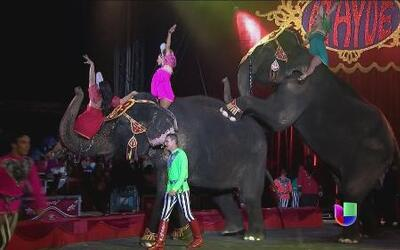 Circo sin animales, ¿perderá su encanto?