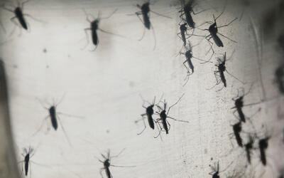 Área del norte de Miami Beach fue declarada libre del virus del Zika