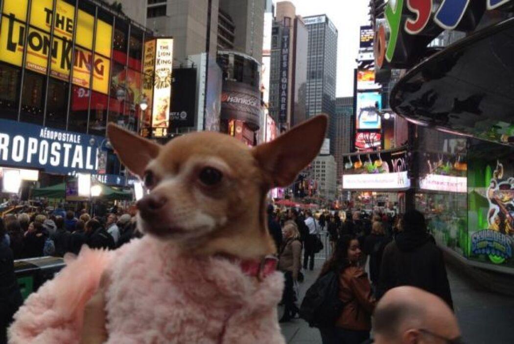 Aprovechando su visita, Honey salió a dar un paseo por Nueva York y qued...