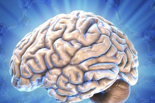 La pubertad cambia la estructura cerebral
