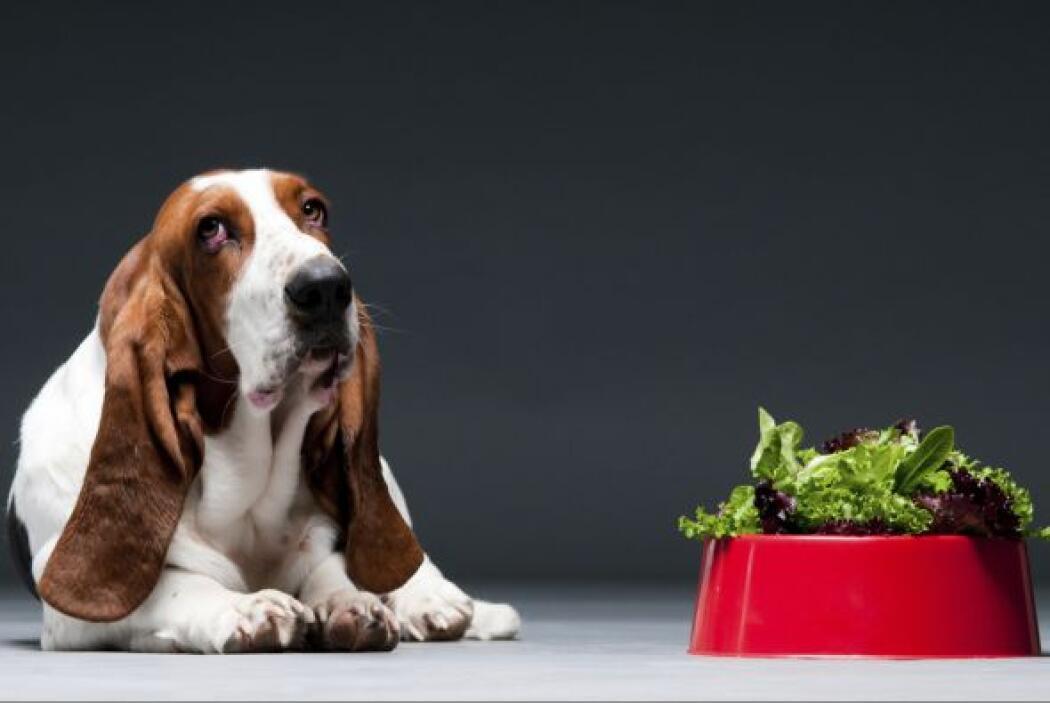 Expertos en nutrición canina aseguran que además de su comida balanceada...