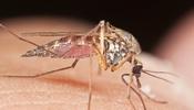 salud mosquito dengue chikungunya