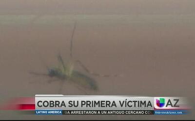 Muerte por virus del Nilo en Maricopa