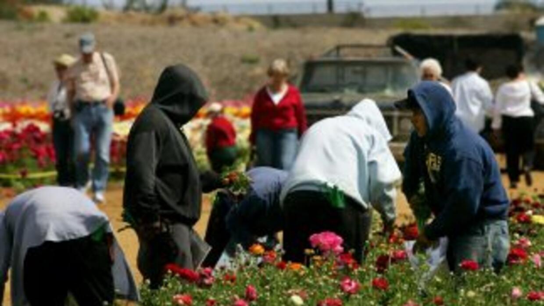 Trabajadores en un campo de California. El sector agrícola se ha visto s...
