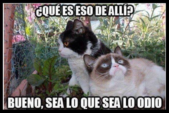 #UnOdioEternoA...Los haters!
