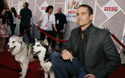 Te presentamos las mejores películas con perros y gatos como protagonis...