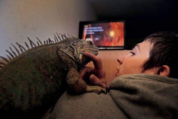 """""""Mis reptiles son mis hijos. Hace mucho que comprendí lo dif&iacu..."""
