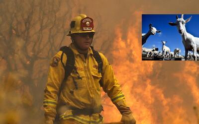 La estrategia de los bomberos de Anaheim para prevenir incendios es usar...