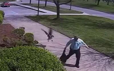 En video: El divertido ataque de un ganso a un policía