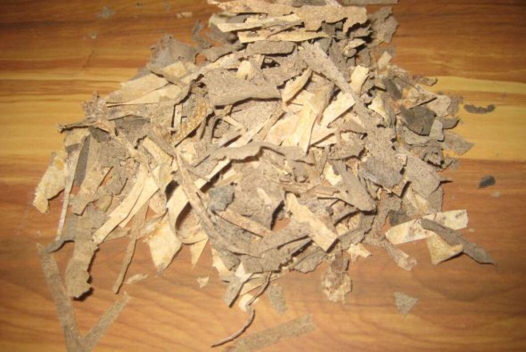 Fabricar papel con la planta, un proyecto que transforma a esta plaga en...