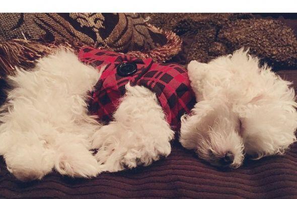El cachorro es travieso y dormilón, ¡después de todo...