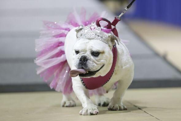 Gracie caminaba muy segura con su tutú y su corona mientras los j...