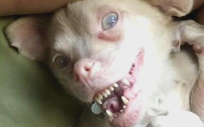 Tucker, el perro con deformidad genética que es popular en redes sociales