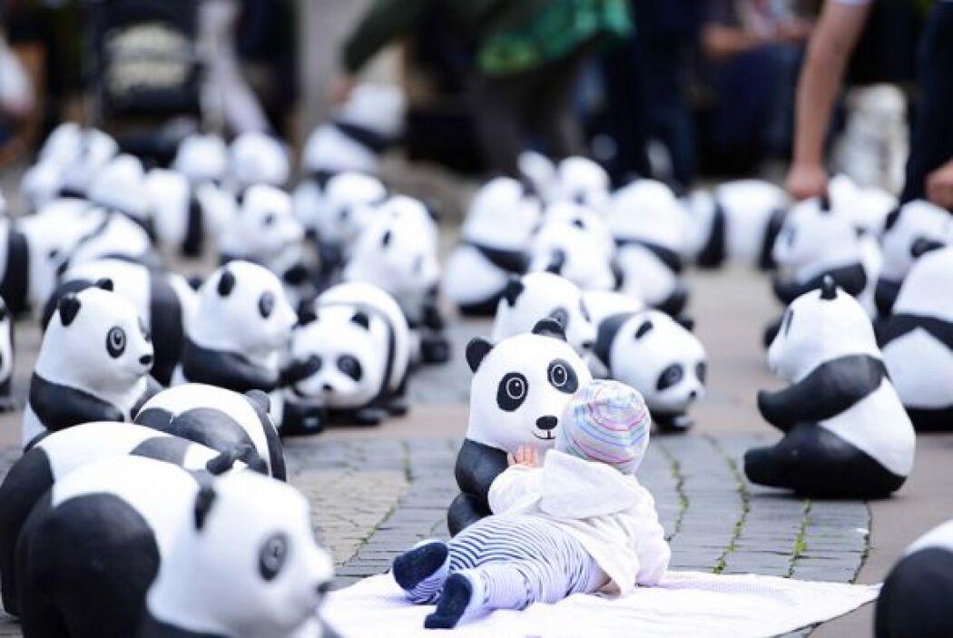 Grandes y chicos por igual, fascinados con los Pandas on Tour, en la pla...