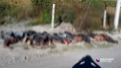 Hallan 11 cadáveres decapitados en Chilapa, Guerrero