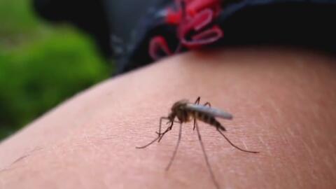 Investigadores avanzan hacia una vacuna eficaz para prevenir el zika