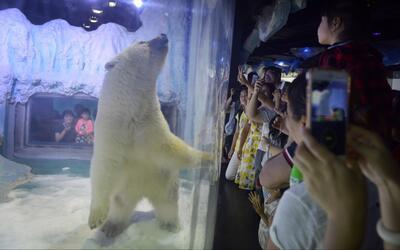 Miles de firmas piden liberar al oso polar 'más triste del mundo'