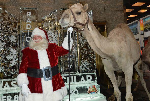 7. Se registraría en una carrera de camellos, ¿te imaginas...
