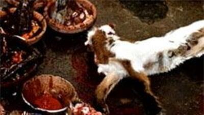 Sacerdote Yoruba ganó juicio contra la ciudad de Euless y podrá continua...