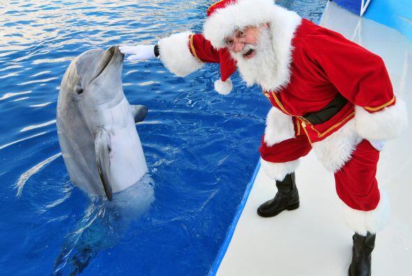 Santa también entrena a sus delfines.