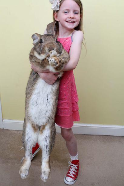 Darius pesa 48 libras, mide 52 pulgadas, lo que se equipara con la talla...