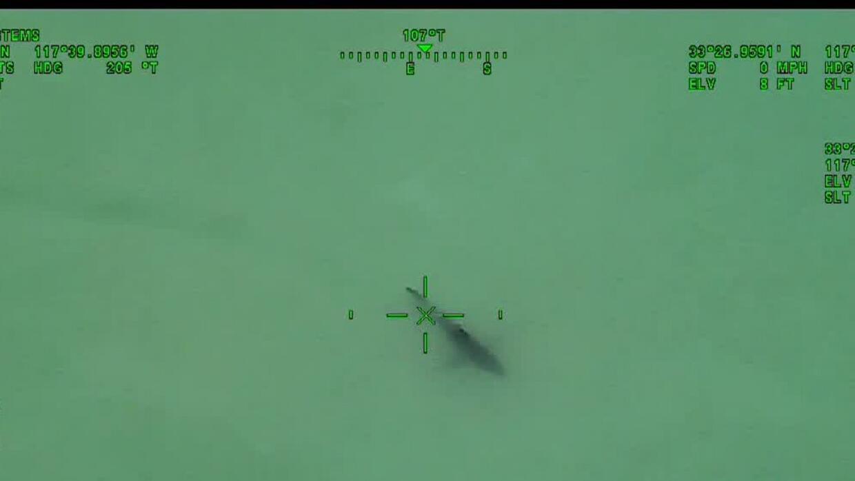 Cierran las playas de San Clemente, California, por presencia de tiburones