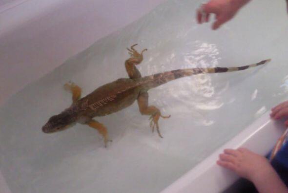 ¡Debe ser impresionante verlo sujetando la correa de sus reptiles!